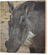African Boar Wood Print