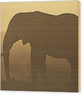 African Elephant At Sunset Amboseli Wood Print