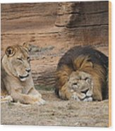 African Lion Couple 3 Wood Print