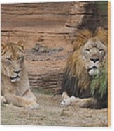 African Lion Couple Wood Print