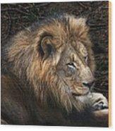 African Lion Wood Print