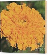 African Marigold Named Crackerjack Gold Wood Print