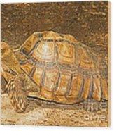 African Spur Thigh Tortoise Wood Print