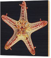 African Star Wood Print