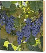 Agriculture - Concord Tablejuice Grapes Wood Print by Gary Holscher
