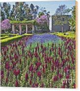 Alcazar Garden Vibrant Color Display Balboa Park  Wood Print
