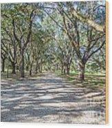 Lowcountry Allee Of Oaks Wood Print