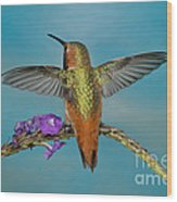 Allens Hummingbird Male Wood Print