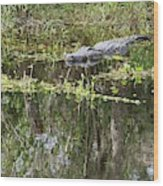 Alligator In Swamp Wood Print