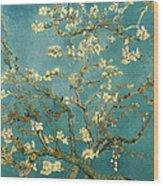Almond Blossoms Wood Print