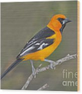 Altamira Oriole Wood Print