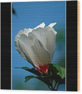 Althea Flower Wood Print