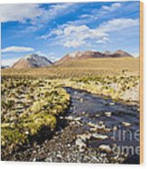 Altiplano In Bolivia Wood Print