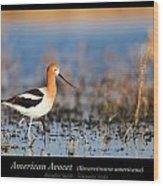 American Avocet Wood Print