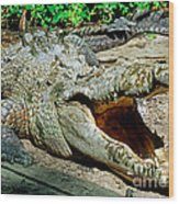American Crocodile Wood Print
