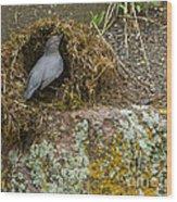 American Dipper Building Nest   #1535 Wood Print