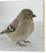 American Goldfinch In The Snow Wood Print