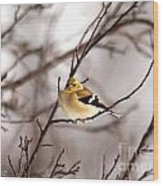 American Goldfinch In Winter Wood Print