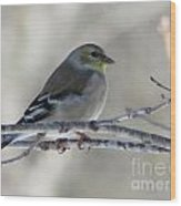 American Goldfinch 1 Wood Print