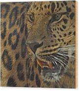 Amur Leopard 1 Wood Print