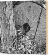 An Old Mill Stone Ely's Mill Roaring Fork Bw Wood Print