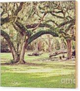 Ancient Oaks Wood Print