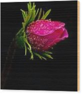 Anemone Flower On Black Wood Print