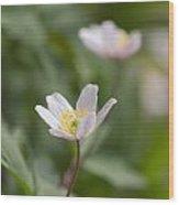 Anemone Windflower Wood Print