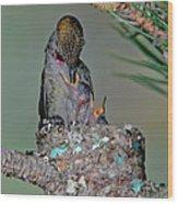 Annas Hummingbird Feeding Young Wood Print