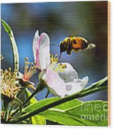 Apple Blossom And Honey Bee Wood Print