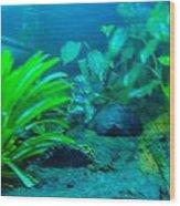 Aquariums Wood Print