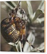 Arachnophobia Wood Print