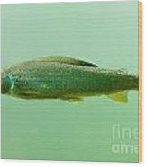 Arctic Grayling - Thymallus Arcticus - Underwater Wood Print