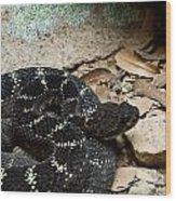 Arizona Black Rattlesnake Wood Print