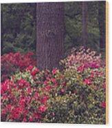 Around A Tree Wood Print