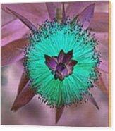Artistic Bottle Brush Flower Wood Print