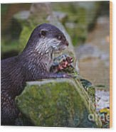 Asian Small Clawed Otter Wood Print