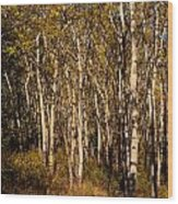 Aspen Forest In Fall Wood Print