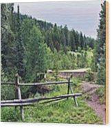 Aspen Trees In Vail - Colorado Wood Print