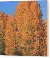 Dm5532-aspens In Fall Wood Print