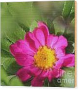 Aster From The Daylight Mix Wood Print