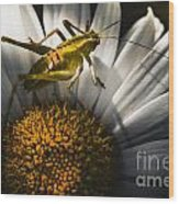 Australian Grasshopper On Flowers. Spring Concept Wood Print