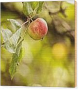 Autumn Apple Wood Print