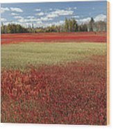 Autumn Blueberry Field Maine Wood Print