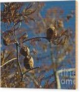 Autumn Coniferous Wood Print