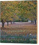 Autumn Splendor Wood Print