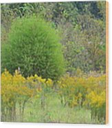 Autumn Grasslands 2013 Wood Print
