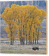 Autumn In The Lamar Wood Print