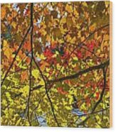 Autumn Maple Leaves Wood Print
