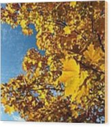 Autumn Splendor 9 Wood Print